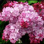 En güzel çiçek