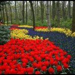 En güzel çiçek bahçesi
