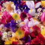 En güzel çiçek çeşitleri