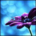 En güzel çiçek facebook kapak
