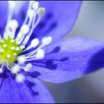 En güzel çiçek facebook profil