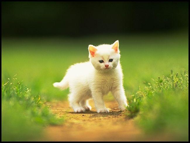 En güzel kedi resimler,