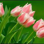 En güzel kokan çiçek