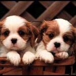 En güzel köpek resimler