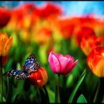 En güzel renkli çiçekler resimler