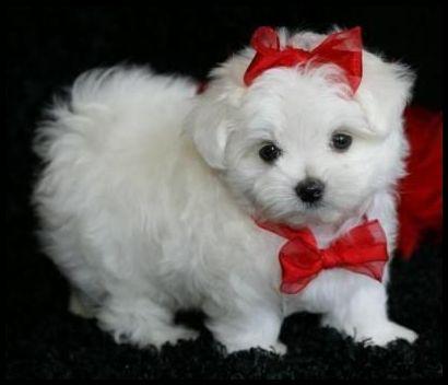 En şirin köpek resimler