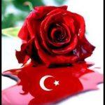Türk bayrağı gül resimleri