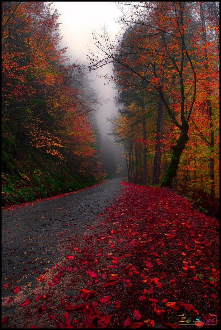Sonbahar yol resimleri