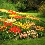 Çiçek Bahçesi Resimleri