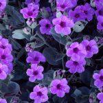 Çiçek resimleri ve isimleri