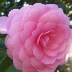 Katlı çiçek resimleri