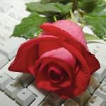Kırmızı Çiçek Resimleri