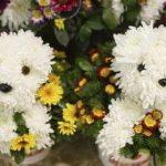 Köpekli Çiçek Resimleri