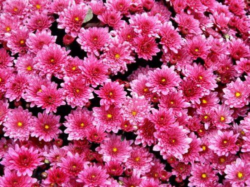Küçük Çiçek Resimleri