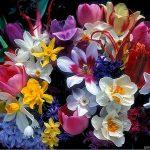 Renkli Çiçek Resimleri